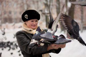 Прирученные голуби