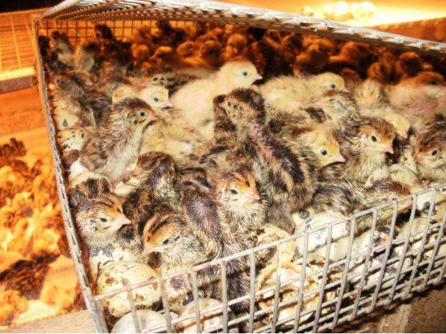 Правильное хранение инкубационного яйца - залог большого потомства