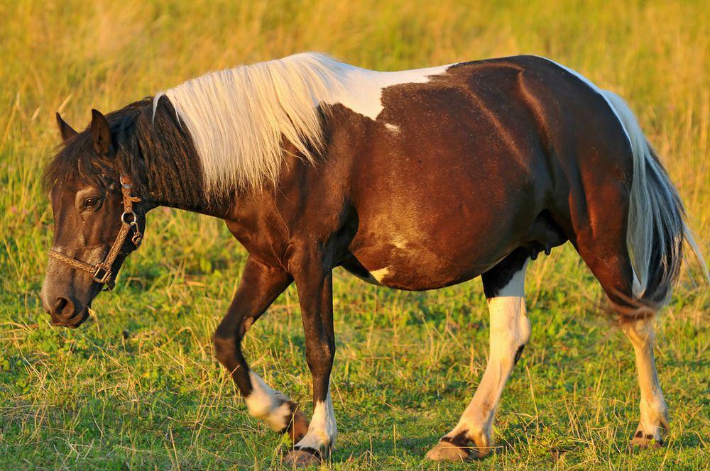 видов термобелья беременность лошади по месяцам детское