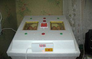 Инкубатор для индюшиных яиц