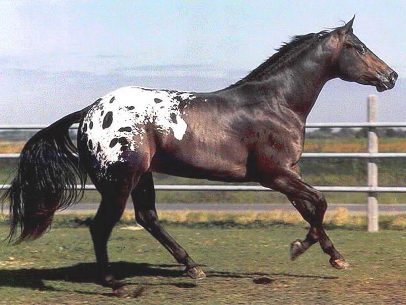 Здоровая лошадь выглядит ухоженной