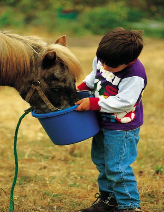 Любая лошадь должна получать полноценное сбалансированное питание