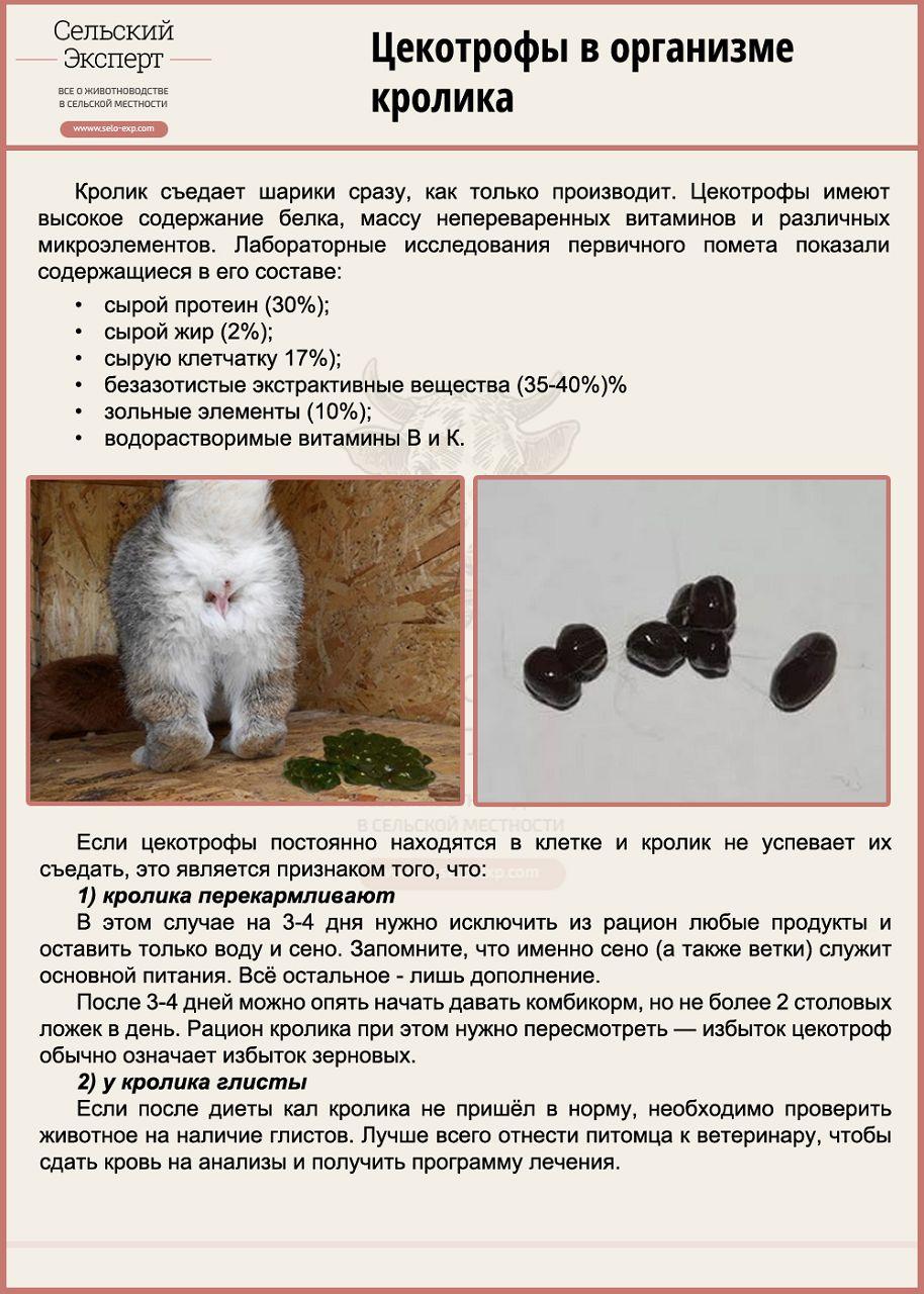 Цекотрофы в организме кролика