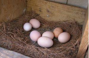 Яйца Геркулеса