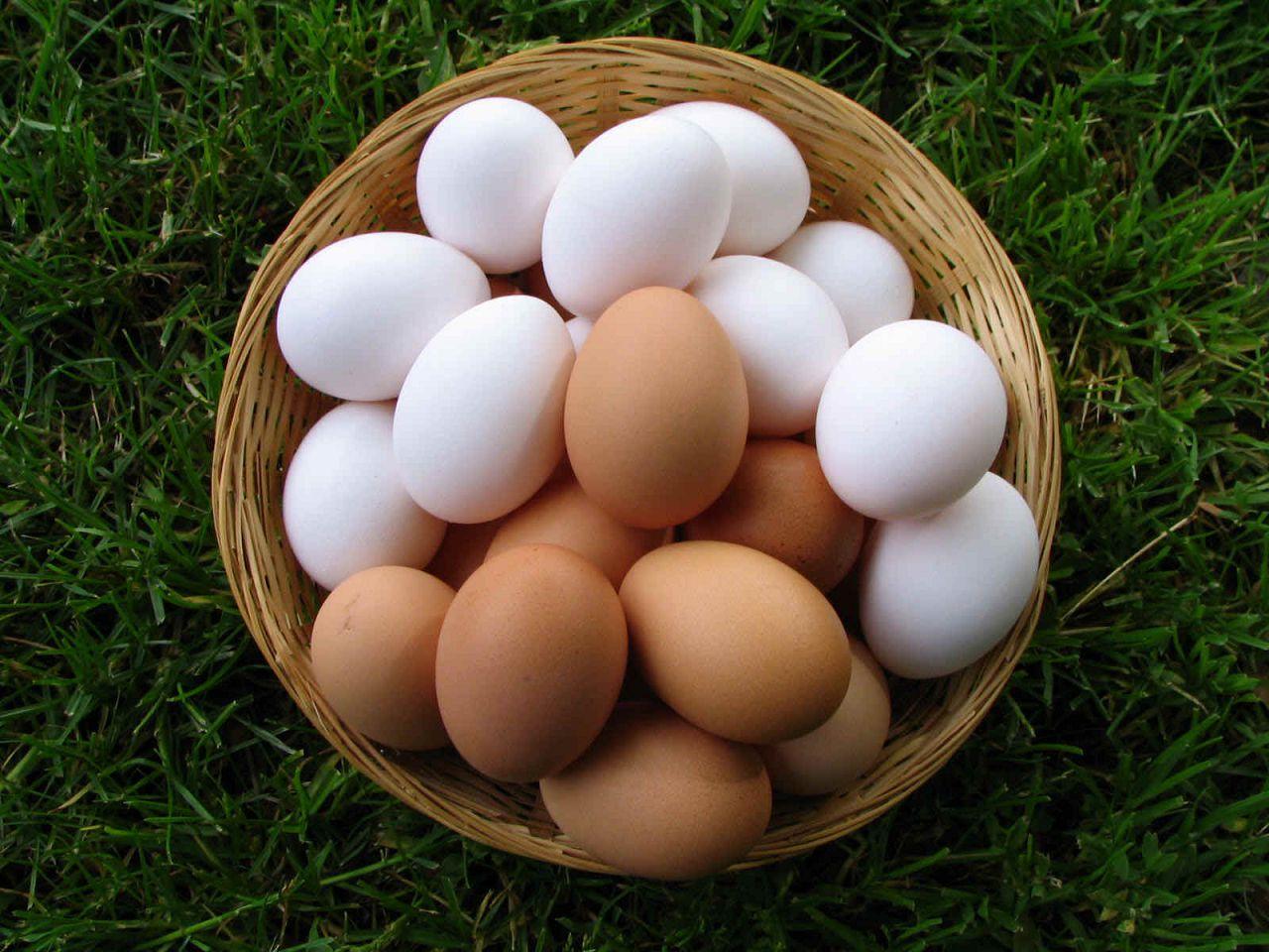 Если соблюдать все правила содержания кур Редбро, они порадуют вас вкусными яйцами и высокой производительностью