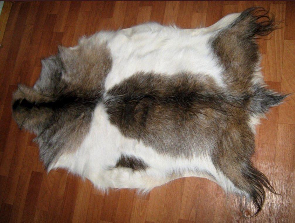 ККак выделать шкуру козы дома?