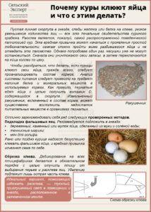 Почему куры клюют яйца и что с этим делать?