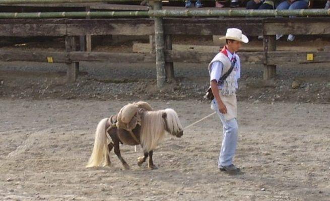 Лошадь Фалабелла отличается миниатюрностью