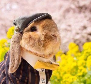 Кролик в праздничной одежде