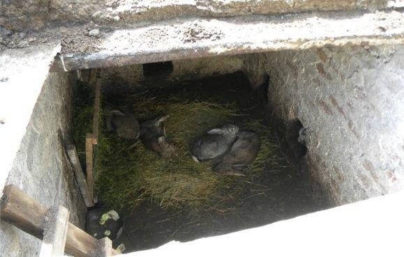 Содержание кроликов в ямах
