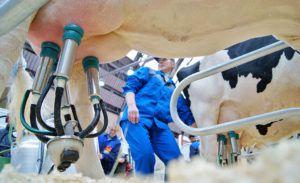 Современные доильные аппараты используют не только в промышленном молочном производстве
