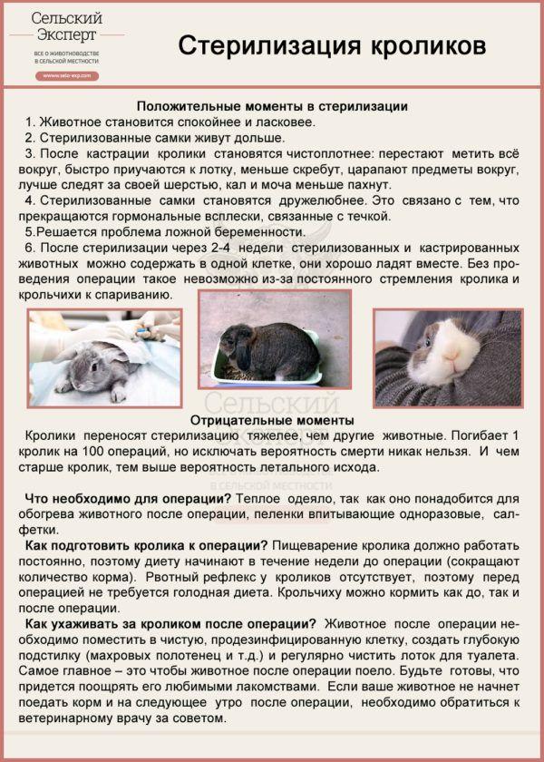 Стерилизация кроликов