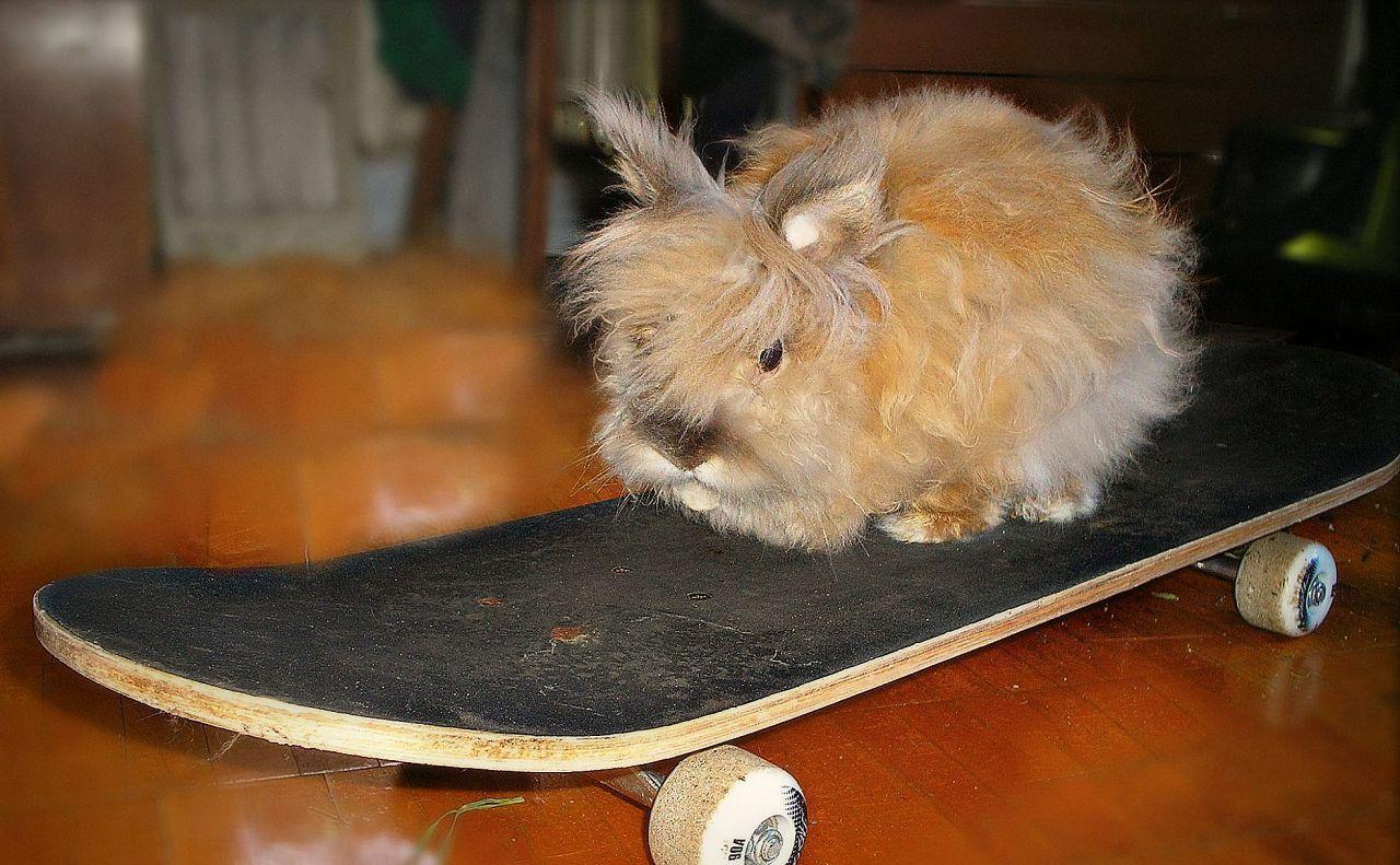 Кролик на скейтборде