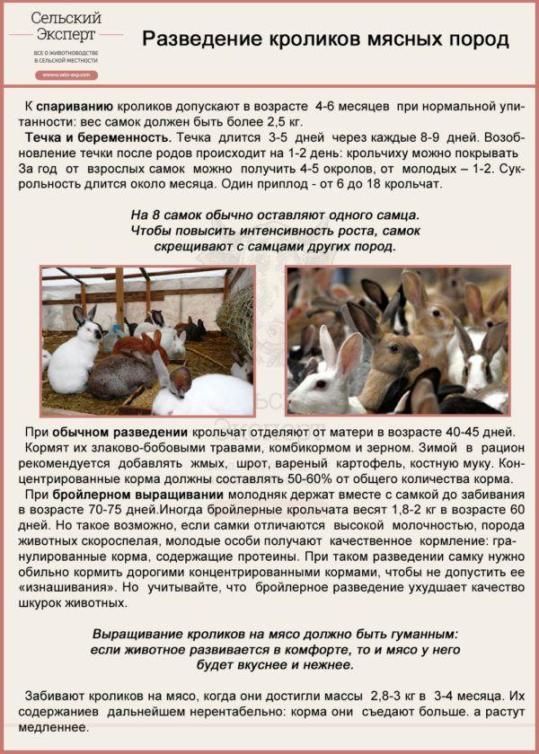 Особенности размножения кроликов при разведении на мясо