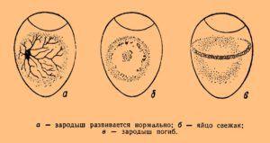 Нарушения развития эмбриона, выявленные на овоскопировании