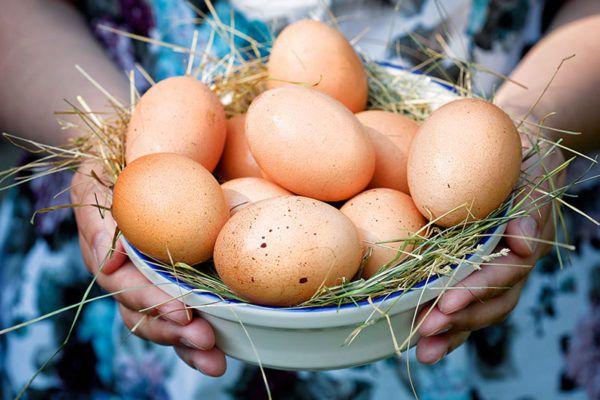 Несушки способны в год производить 170 - 250 яиц