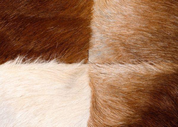 Пример козлины с разным ворсом