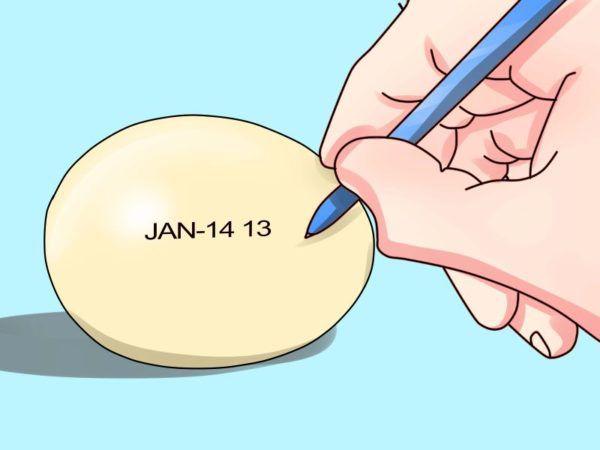 Указание даты закладки яиц в инкубатор