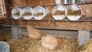 Гнезда должны быть комфортными для несушек