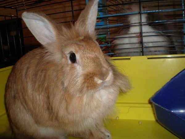 Не все кролики проявляют мягкий характер