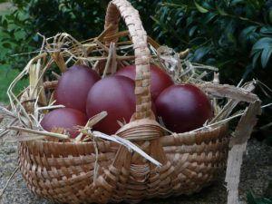 Яйца Маран