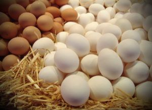 Одна несушка способна произвести более 300 яиц в год