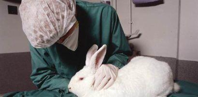 Профилактическое обследование крольчихи