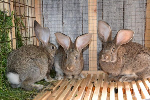 В крольчатнике должно быть тепло