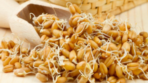 Как прорастить пшеницу для кур