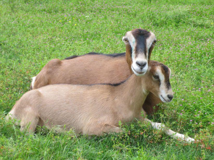 Оригинальная внешность и краткий нрав — первое, что приходит в голову при упоминании этих животных