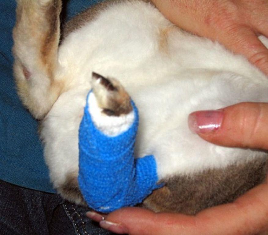 Помимо дезинфекции вольеров наружно препарат применяют для обработки ран на теле кролей