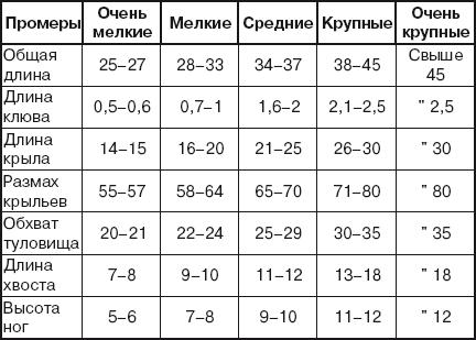Таблица с классификацией размеров частей тела голубя.