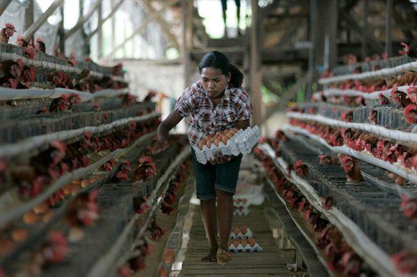 Если на ферме есть наёмный работник, то при расчете окупаемости надо учитывать и его зарплату