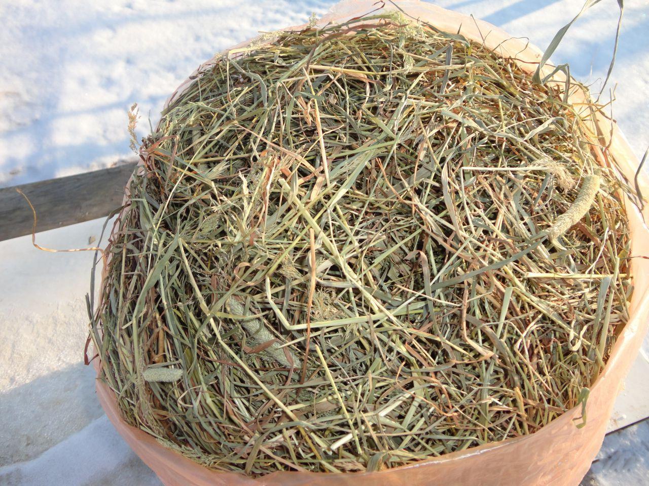 Среди грубых кормов луговое сено считается оптимальным вариантом