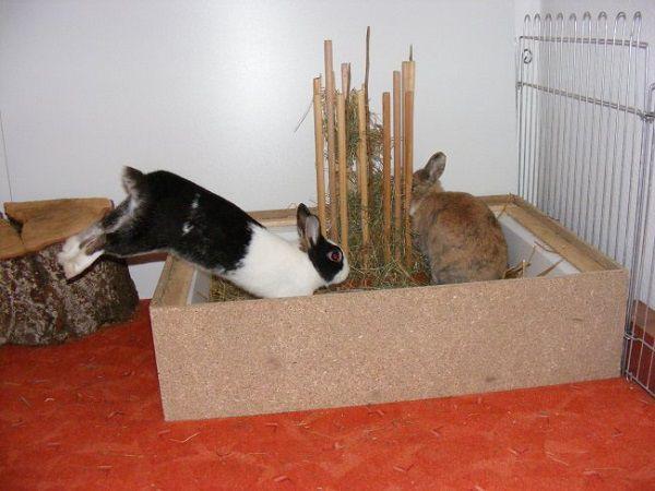Оградите кролику на первое время небольшой участок своего жилья