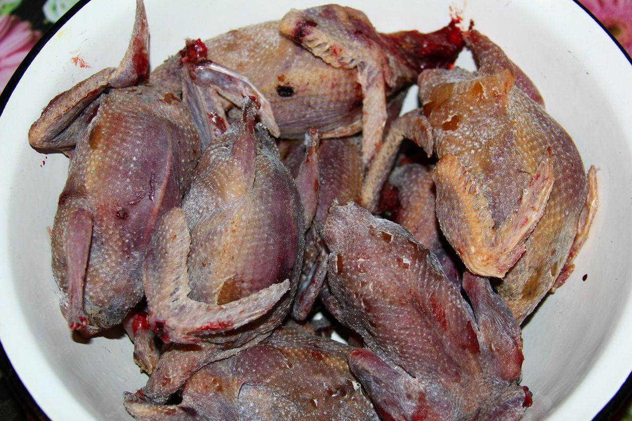 дикий голубь рецепт с фото пошагово