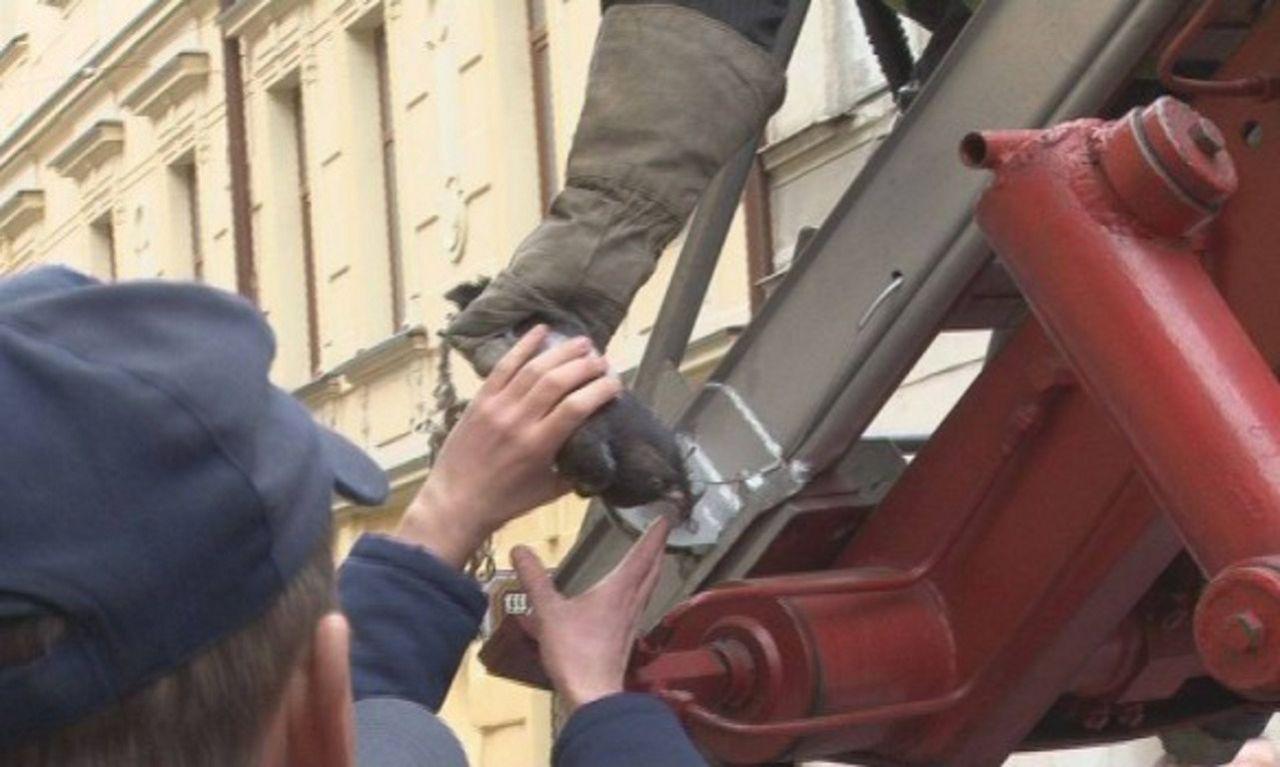 Спасатели помогают голубю в сложной ситуации