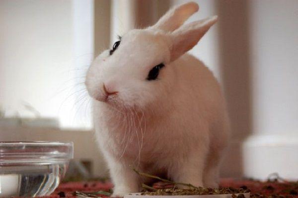 Комбикорм додаст кролику все необходимые полезные вещества