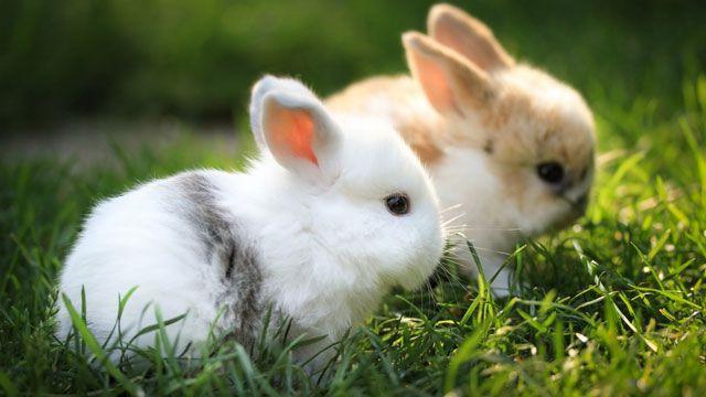 В теплое время года малышам, как и зрелым особям, необходимо щипать молодую траву.