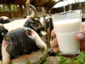 В состав молока входит более 100 полезных компонентов