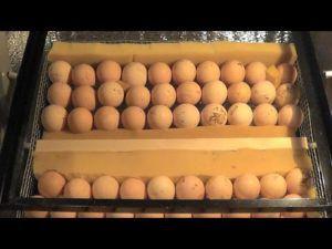 Если яиц меньше, чем может вместить пространство оборудования, то для придерживания материала используют отрезки поролона