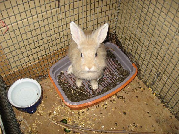 Собирайте кроличьи катышки по квартире и складывайте в лоток