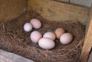 Устелите гнездо сеном