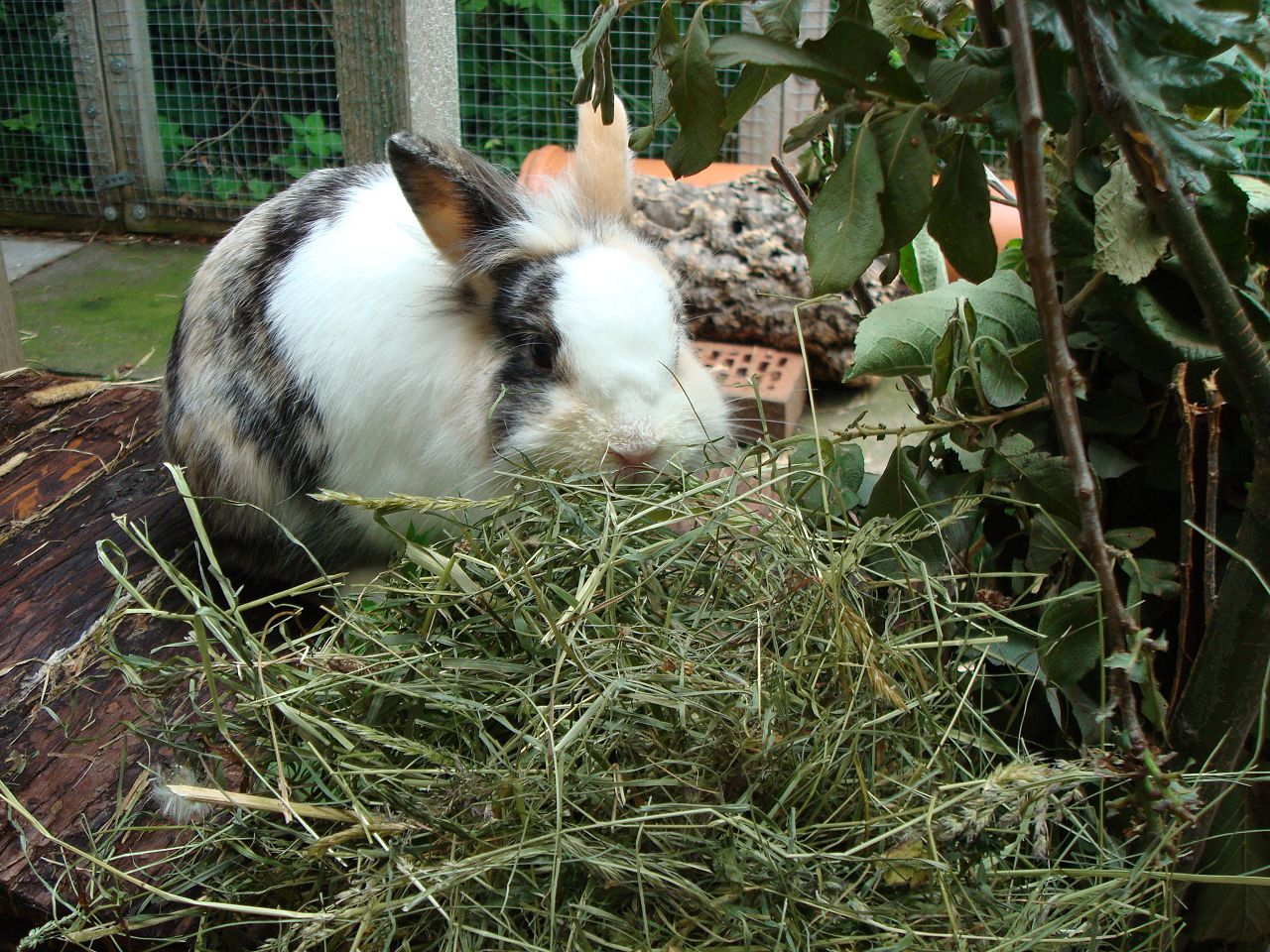Сено для кроликов всегда должно быть свежим
