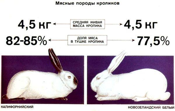 Мясные породы кроликов (в сравнении)