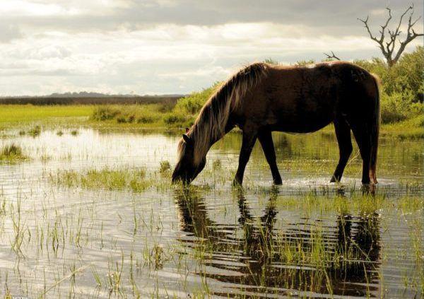 Летом животным требуется не менее 5 ведер воды