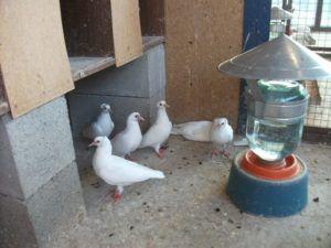 Удобная и практичная поилка для птиц