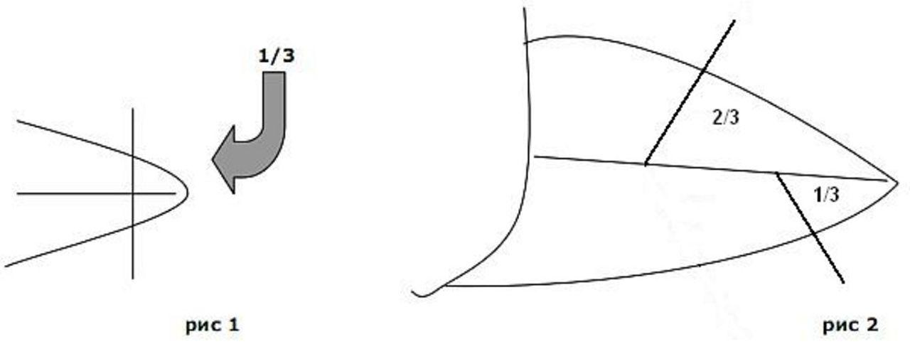 Схема отсечения части клюва в домашних условиях