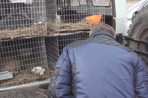 В питомнике следует оценить условия содержания крольчат