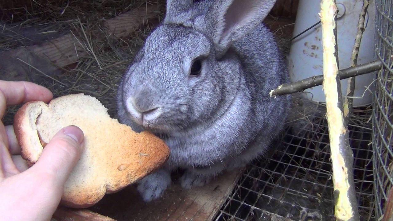 Давать кролям можно только хлеб, не выпечку